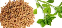 fenugreek-health-benefits